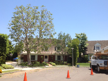 Rob's Tree Service Newport Beach After