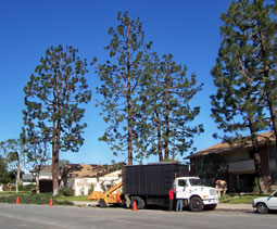 Rob's Trees Service is fully equipped with state-of-the-art equipment and an experienced crew.